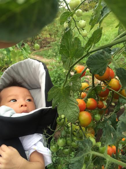 産まれたてベビーちゃんがトマトとご対面。 ミニトマトが中玉にみえます。。