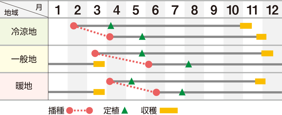 龍翔(りゅうしょう)