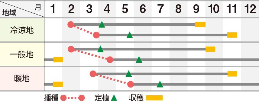 龍輝(りゅうき)