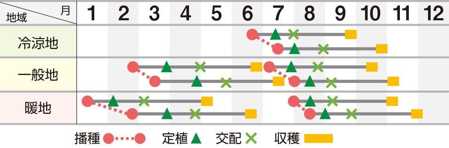 ソナタ春秋系(UA‐313)