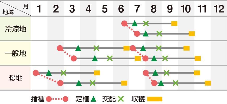 雅早春晩秋309(UA-309)